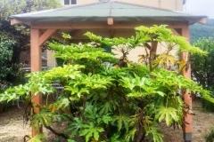 Gazebo_legno_piante_larice
